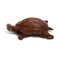 chinese wooden soft shell turtle
