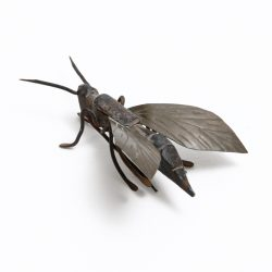 Japanese Iron Insect