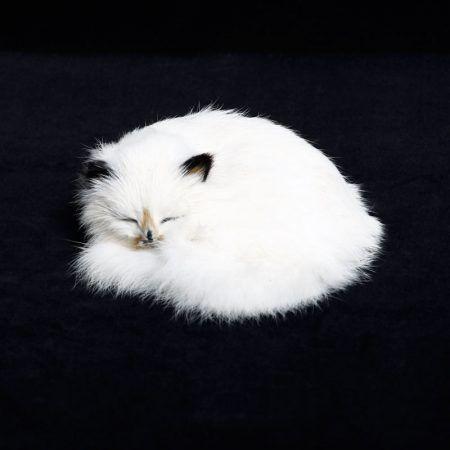 rabbit fur kitten